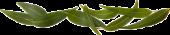 img_leaves_trans